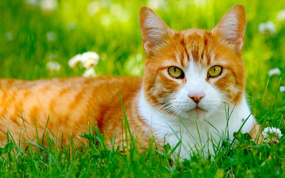 The Cat Health Guide Dedicated to Helping Your Cat Stay Healthy