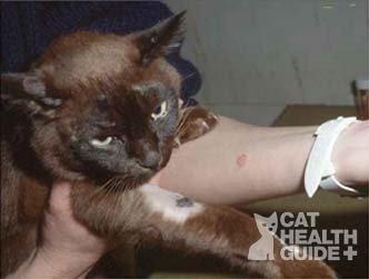 cat hair loss ringworm