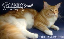 Tirtham Cattery