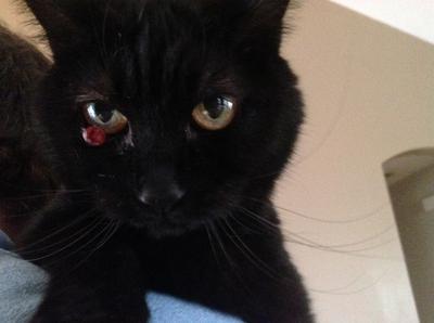 Possible Cat Eye Cyst