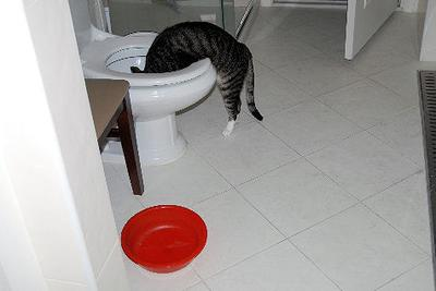 Cat Behavior and Water: Somtimes You Just Have to Wonder <br>Photo Credit: Myllissa
