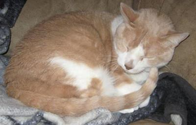 Cat with Lasting Cat Cough Problem - Picture of T.C.