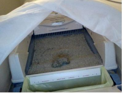 Dr. Elsey's Forms a Hard Clump which is easy to scoop away.  Littergard on Littermaid box helps to keep litter in box.