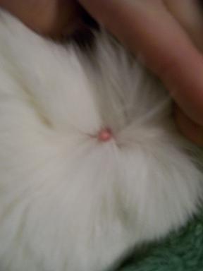 Cat Skin Growth