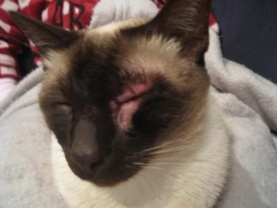Cosmo's Unknown Cat Skin Disorder