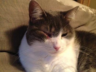 Abby: Age 12, Tabby Cat.