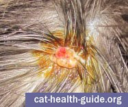 Cat Skin Wart or other skin growth (betadine causing orange color)