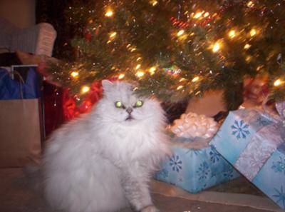 Sugar Boy at Christmas